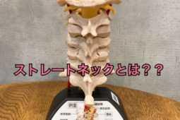 頸椎 骨模型